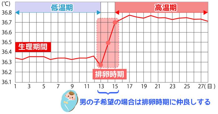 基礎体温グラフ男の子希望の場合